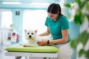 D4M - Dog massage_older dogs