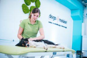 D4M - Dog massage_sport dogs