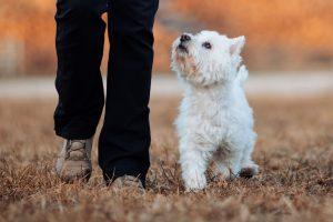 D4M_Family dog