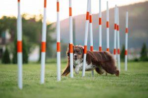 D4M_Sport dog